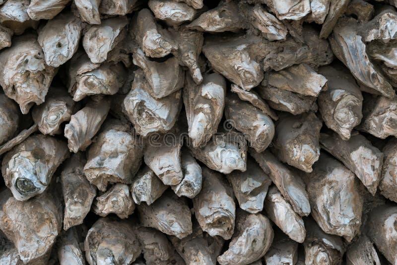 Mur fait de coquilles d'huître photos stock