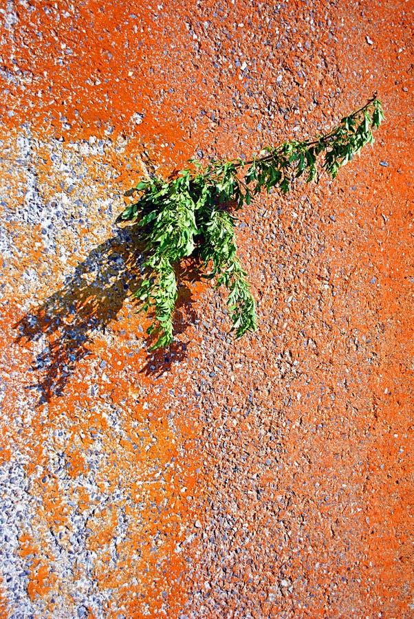 Mur rugueux jaune de concrele avec le trou par quel arbre croissant avec les feuilles vertes, fin extérieure vers le haut de déta photo stock