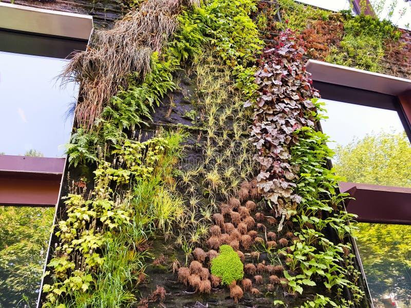 Mur vert d'un bâtiment moderne photos libres de droits