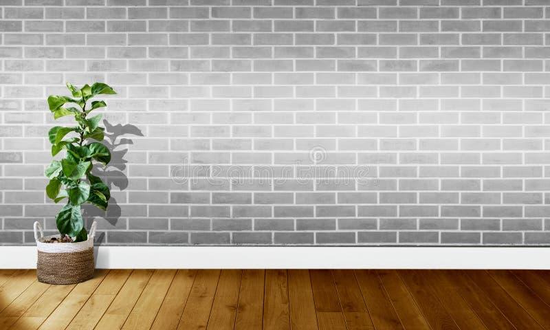 Mura di mattoni grigi bianchi con i pavimenti di legno ed albero con luce naturale per fotografia del fondo immagini stock