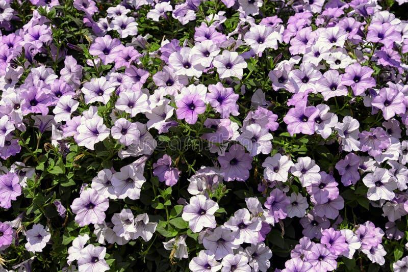 Mura perfetta di fiori fotografia stock libera da diritti