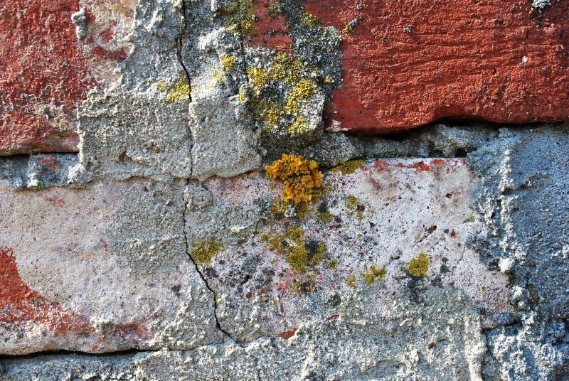 In muratura con la crepa concreta è comparso e coltivato i licheni ed il muschio immagine stock libera da diritti