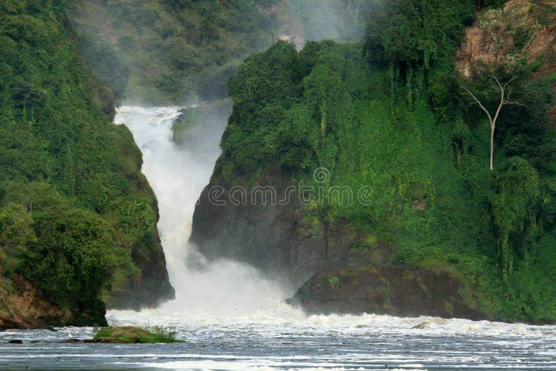 Murchison下跌NP,乌干达,非洲 库存照片