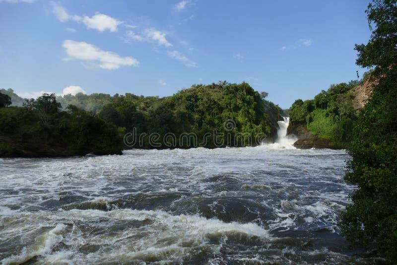Murchison Fälle, Uganda stockbilder