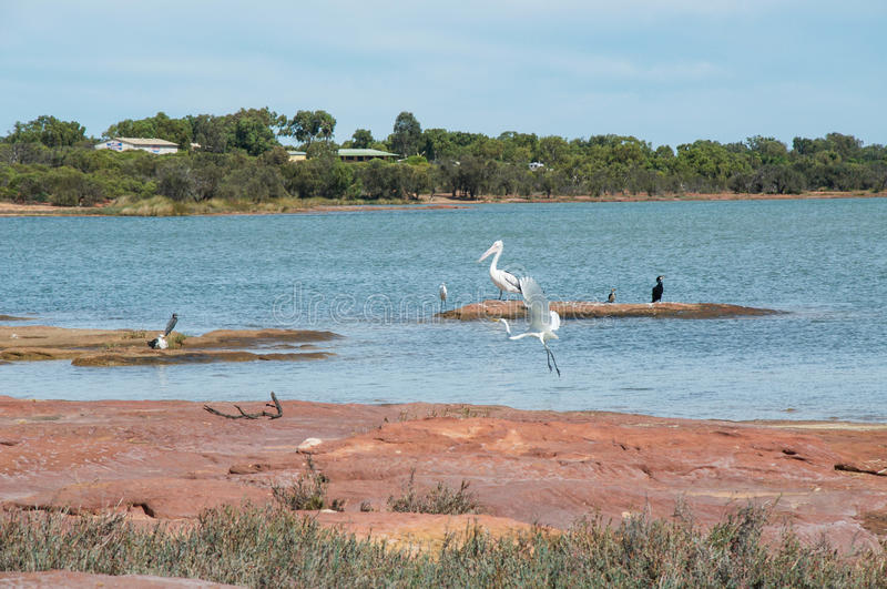 Murchison-Fluss-wild lebende Tiere lizenzfreie stockfotos