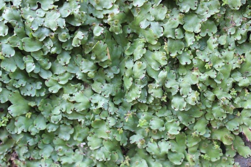 Muren en bladeren royalty-vrije stock afbeeldingen