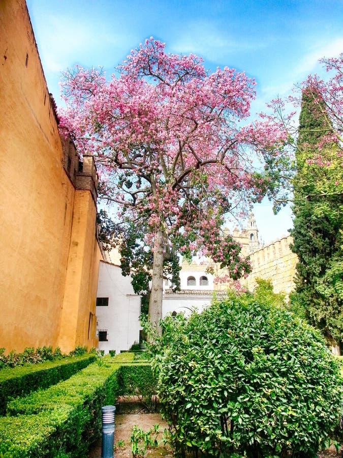 Muren en Boombloesem in Bloei Alcazar Sevilla Andalucia Spanje stock foto