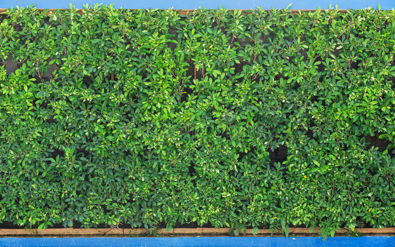 Muren van donkergroen gras in het park royalty-vrije stock foto