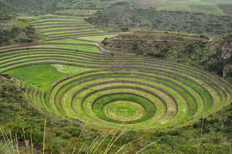 Mureny Inca ruiny, Peru obraz royalty free