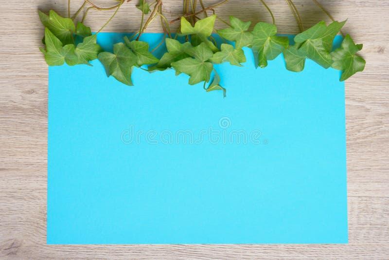 Murgröna på färgpapper royaltyfria bilder