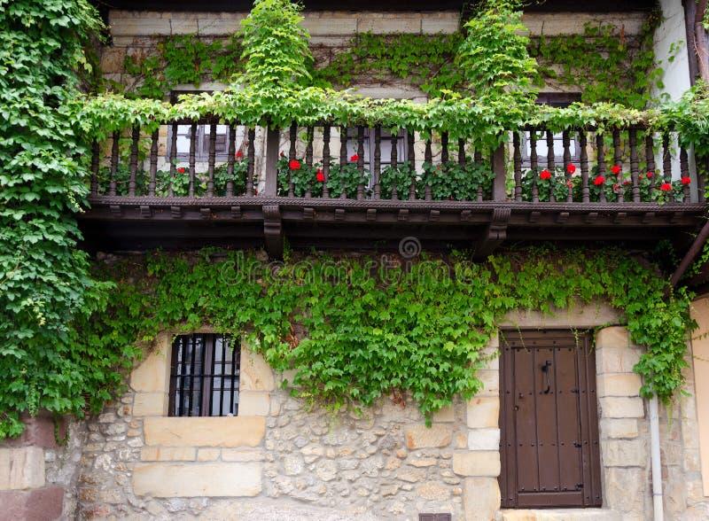 Murgröna På Fasaden Royaltyfri Foto
