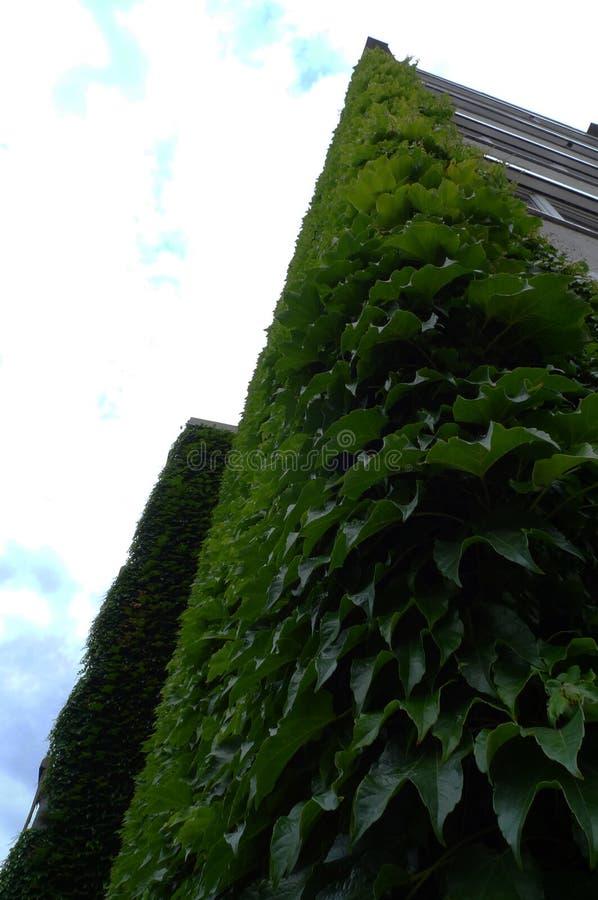 Murgröna på fasaden av byggnaden royaltyfria foton