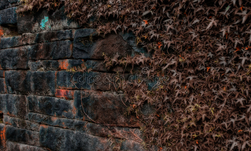 murgrönavägg royaltyfria foton