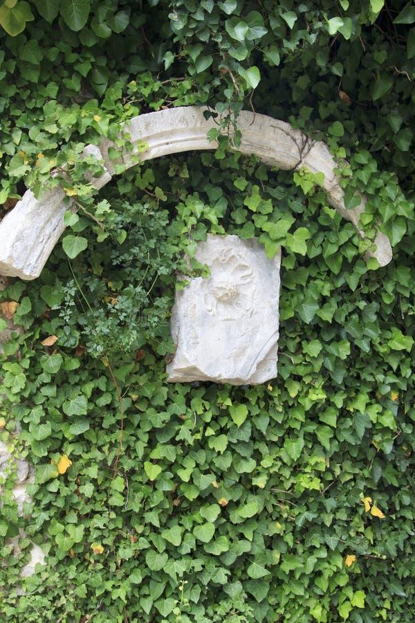 muri nascosto sotto un'edera di bobina con una figura di pietra antica fotografie stock