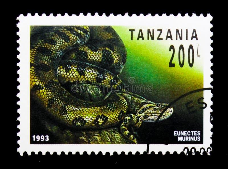 Murinus comum do Eunectes da anaconda, répteis do serie de Tanzânia, cerca de 1993 fotos de stock