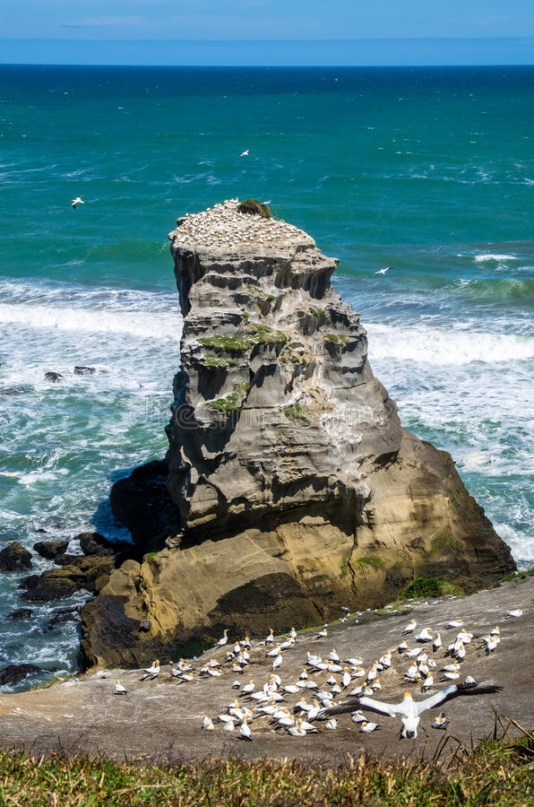 Muriwai地方公园,新西兰 库存照片