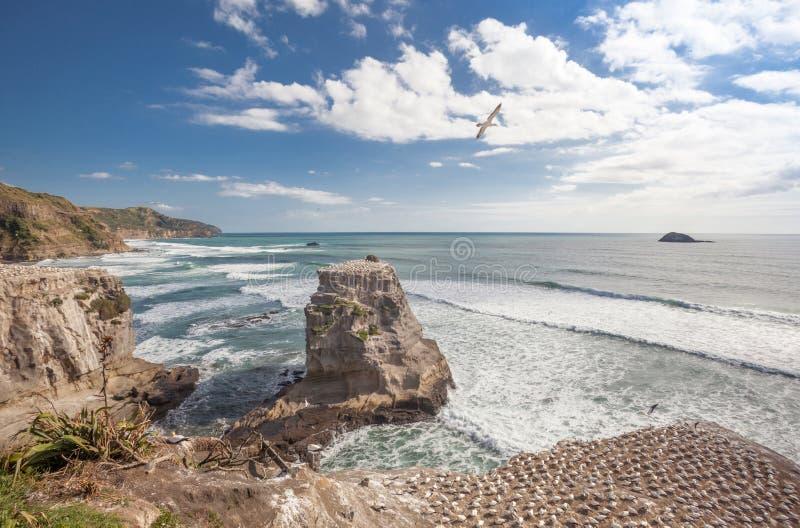 Muriwai strand royaltyfria foton