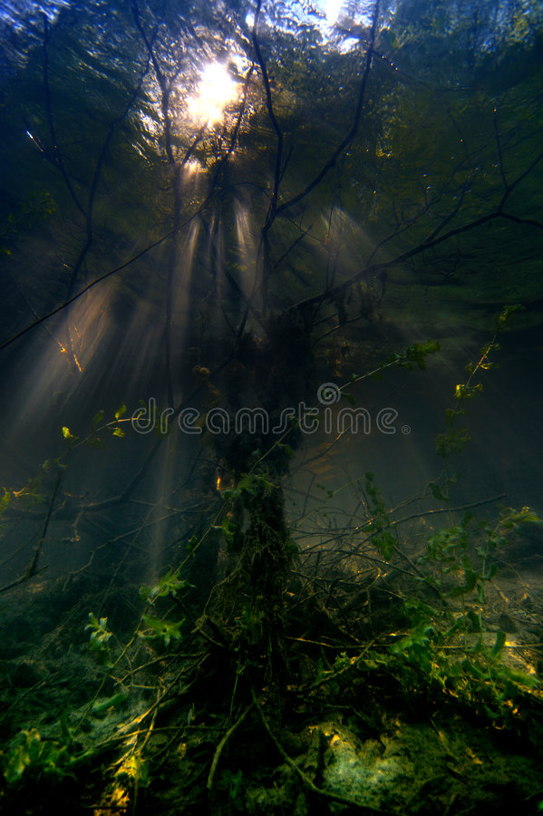 Murky Waters. Underwater trees and foilage in a clear lake stock photography