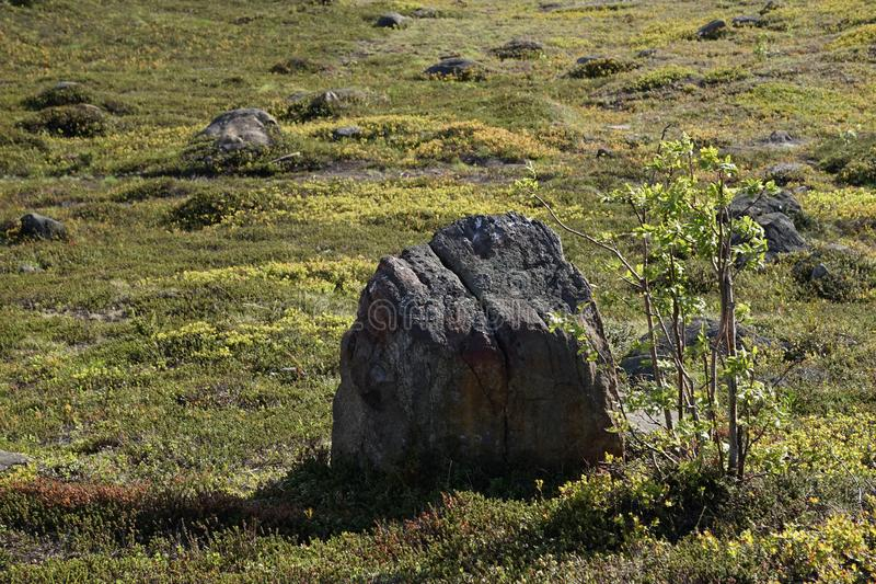 A group of stones lying on the green spring grass in Murmansk on a clear, Sunny day. royalty free stock photo