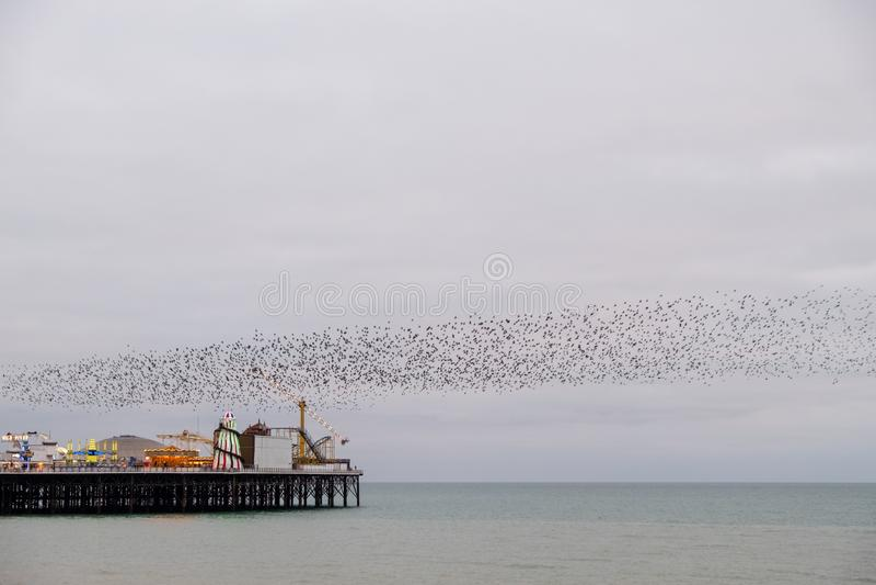Murmuration de estorninos sobre el embarcadero del palacio, Brighton, Sussex, Reino Unido Fotografiado en una tarde fría en dicie imagen de archivo