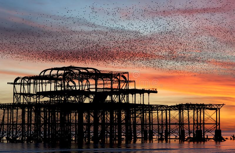 Murmuration over the ruins of Brighton`s West Pier on the south coast of England. Starlings flying in a huge mass in the autumn sunset skies above the ruins of stock photo