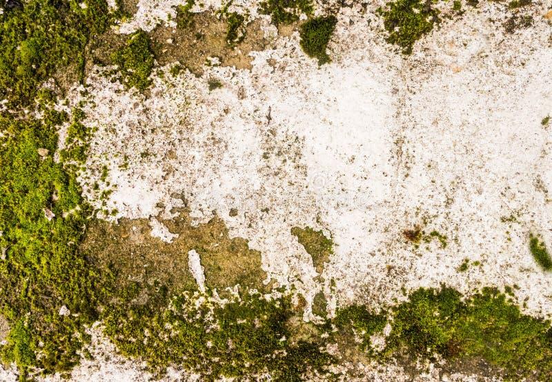 Muro de cemento descuidado con el musgo foto de archivo libre de regalías