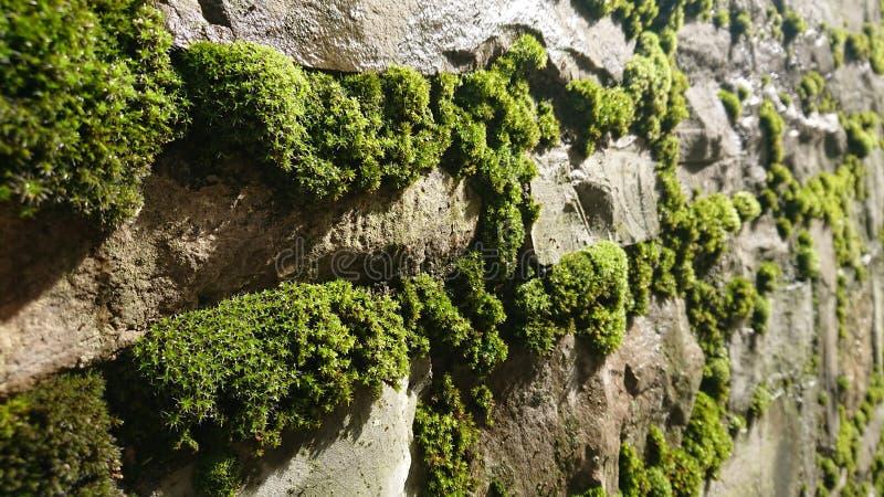 Muro de piedra verde Moss foto de archivo libre de regalías