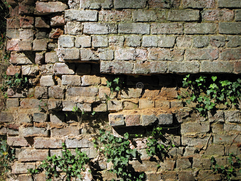 Muro di mattoni di sbriciolatura di lerciume con l'edera fotografie stock libere da diritti