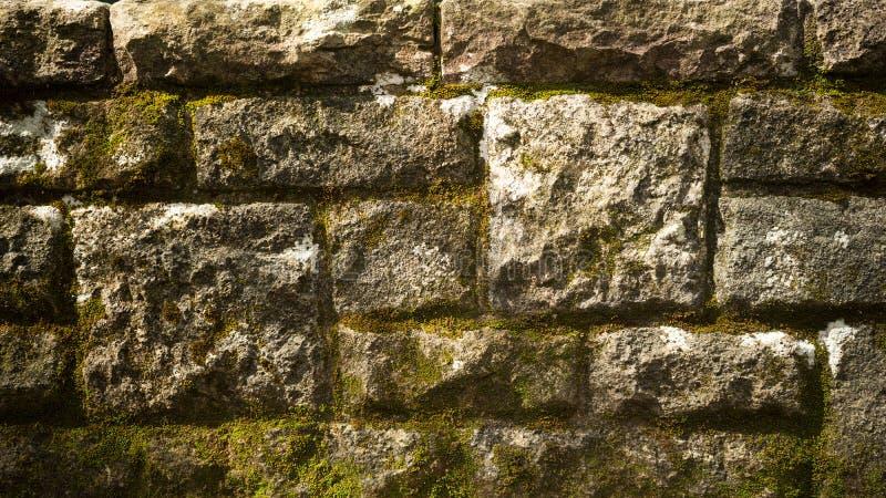Muro di mattoni muscoso fotografie stock libere da diritti