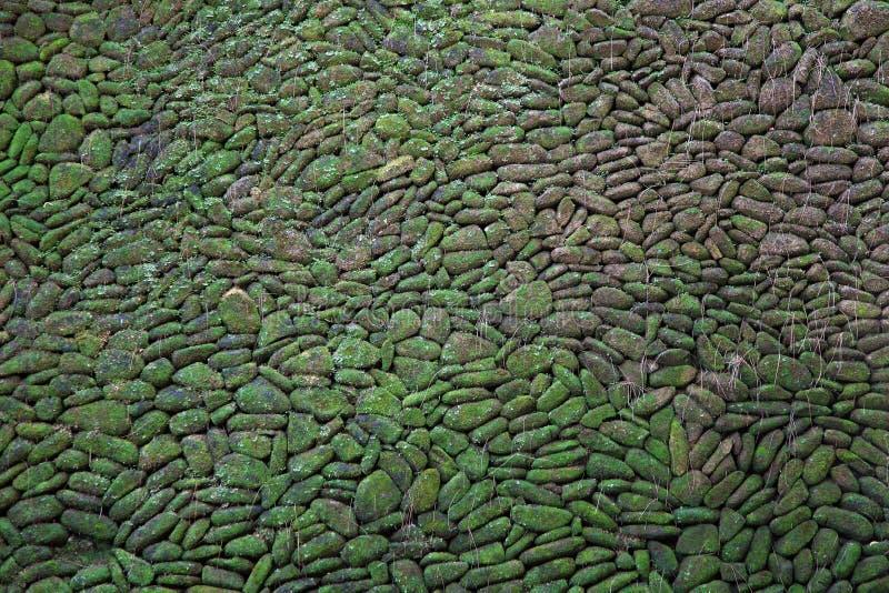 Muro di mattoni verde del muschio fotografia stock