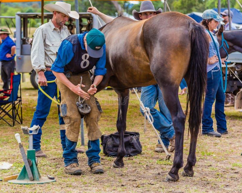 Murrurundi, NSW, Austrália, 2018, o 24 de fevereiro: Concorrente no rei do cavalo das escalas que calça a competição fotos de stock
