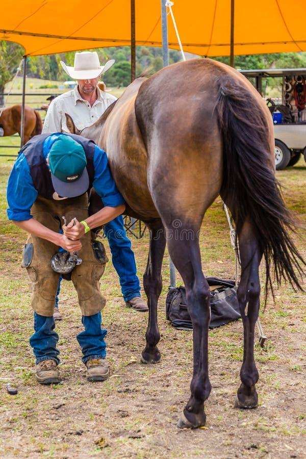 Murrurundi, NSW, Austrália, 2018, o 24 de fevereiro: Concorrente no rei do cavalo das escalas que calça a competição fotos de stock royalty free
