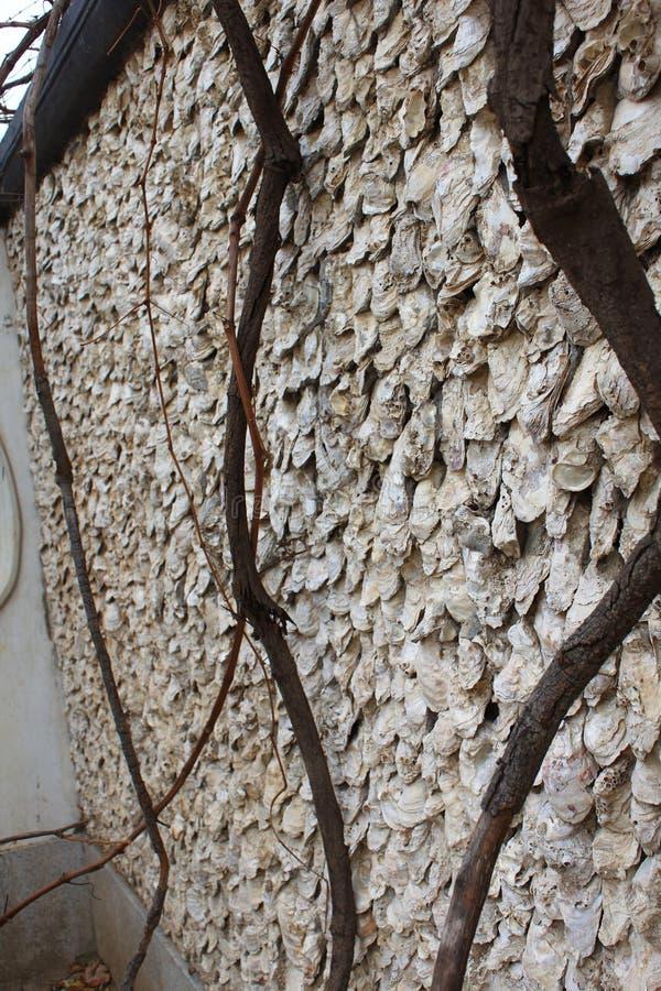 Murs de Shell images libres de droits
