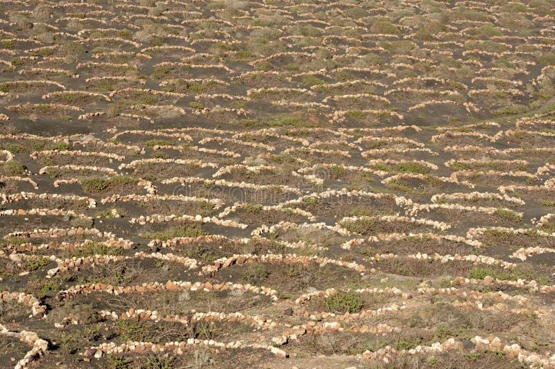 Murs de vigne, Lanzarote photographie stock