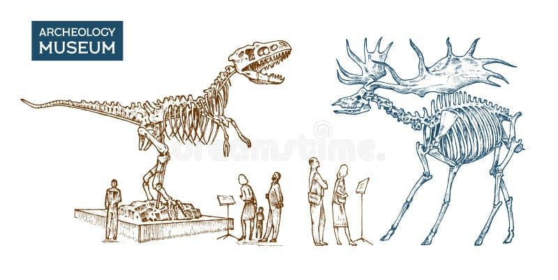 Musée archéologique de vintage Les visiteurs regardent l'objet exposé Squelette historique d'un dinosaure animal éteint illustration stock