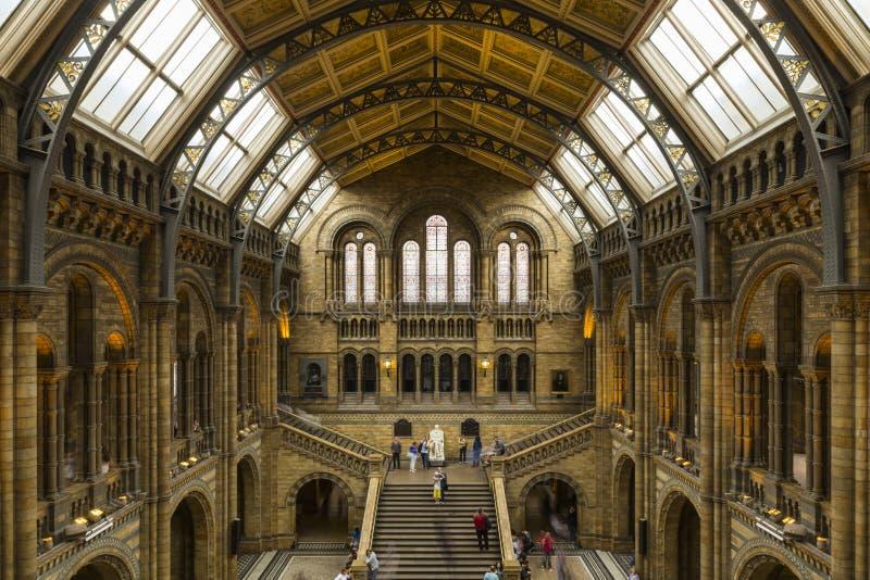 Musée d'histoire naturelle images libres de droits