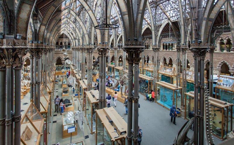 Musée d'Université d'Oxford d'histoire naturelle photographie stock