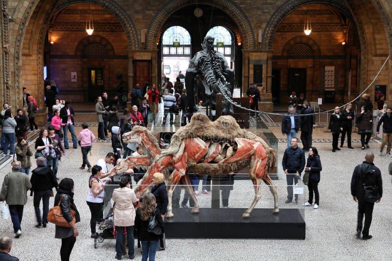 Musée de Londres photo stock