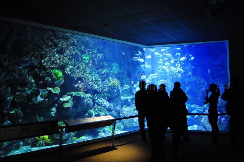 Musée National de Marine Biology et d'aquarium photos libres de droits