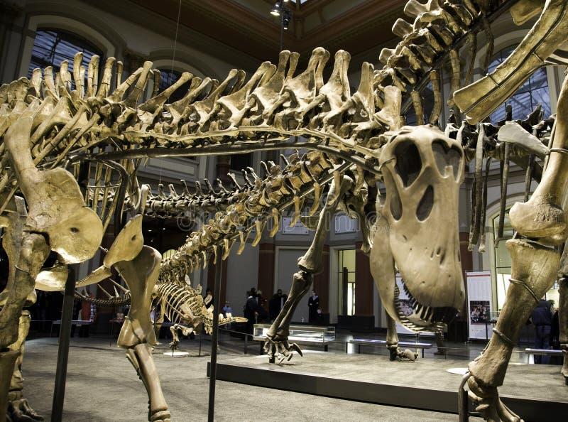 Musée paléontologique à Berlin images libres de droits