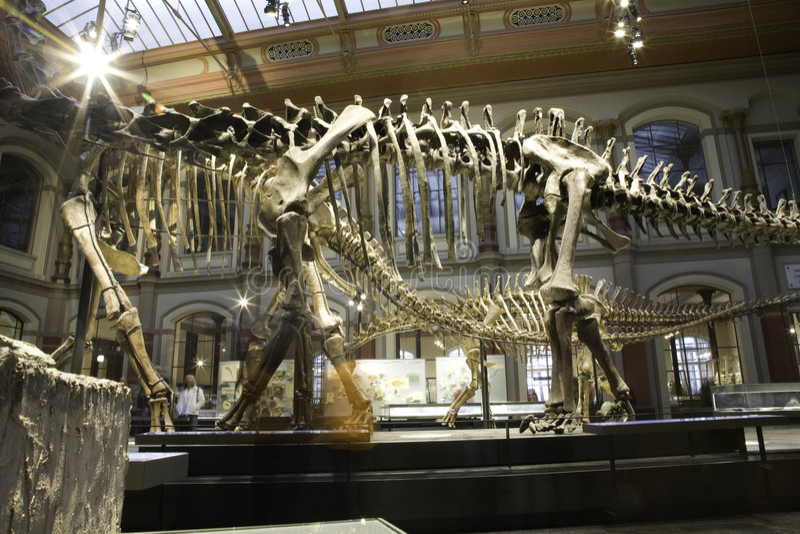 Musée paléontologique à Berlin photo libre de droits