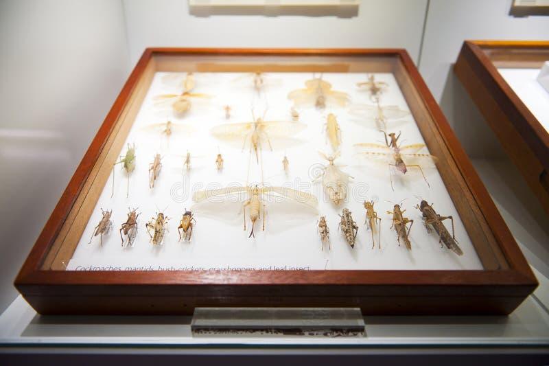 Mus?e d'histoire naturelle ? Londres photo stock