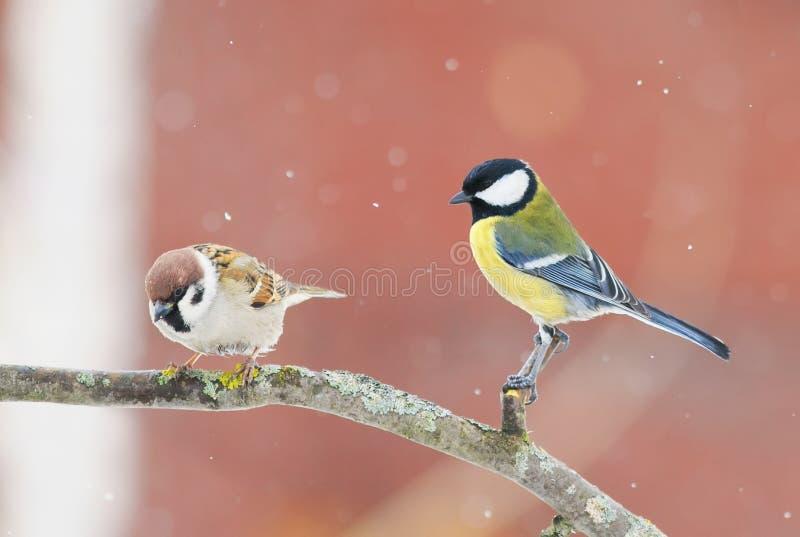 Mus en chickadeezitting op een tak in de winterpark in sno royalty-vrije stock fotografie