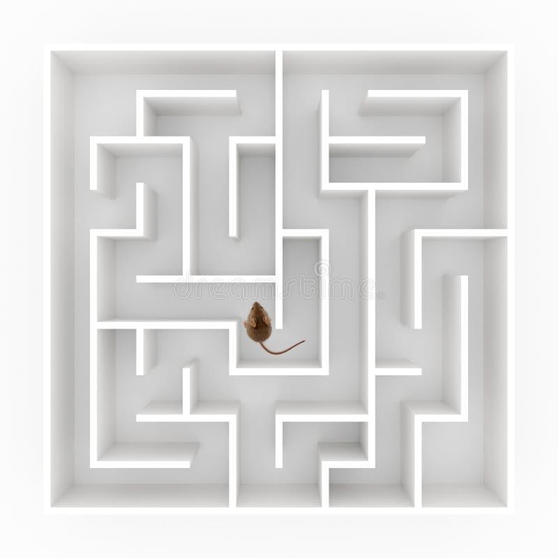 Mus i labyrint royaltyfri foto