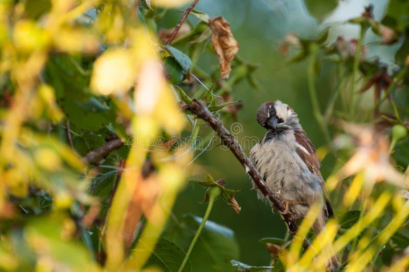 Mus op de boom in de zomertijd Mus in aard stock fotografie