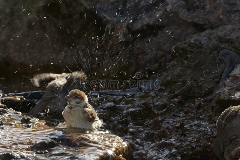 Mus in water royalty-vrije stock afbeelding