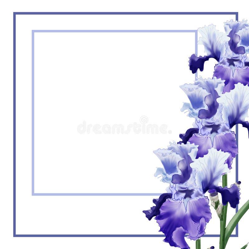 Muscari de fleur d'illustration d'aquarelle sur le fond blanc pour la carte de voeux illustration stock