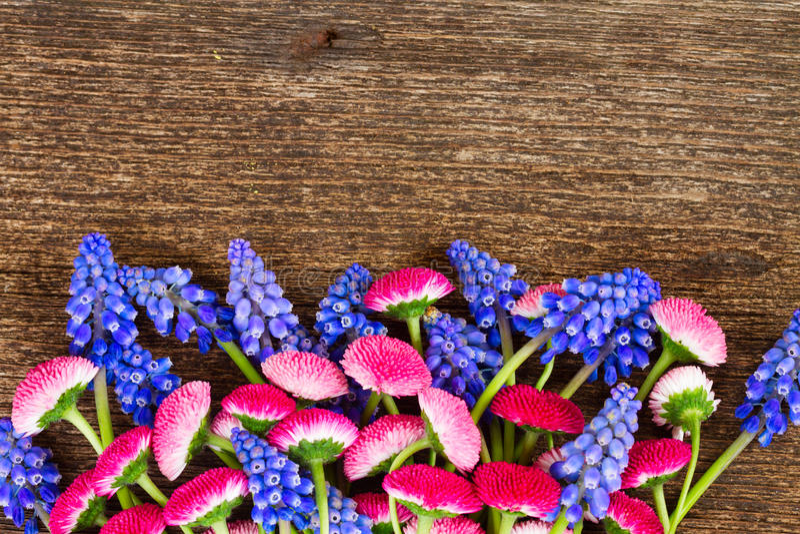 Muscari e Daisy Flowers imagens de stock royalty free