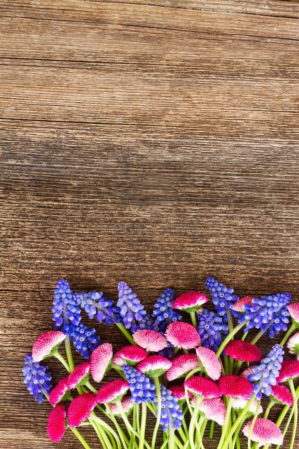 Muscari e Daisy Flowers imagem de stock royalty free