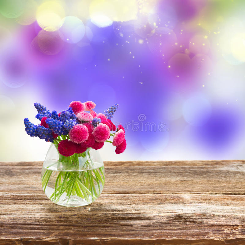 Muscari e Daisy Flowers fotos de stock royalty free
